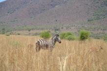 Pilanesberg - dec 2015